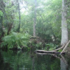 Florida's Secret Places